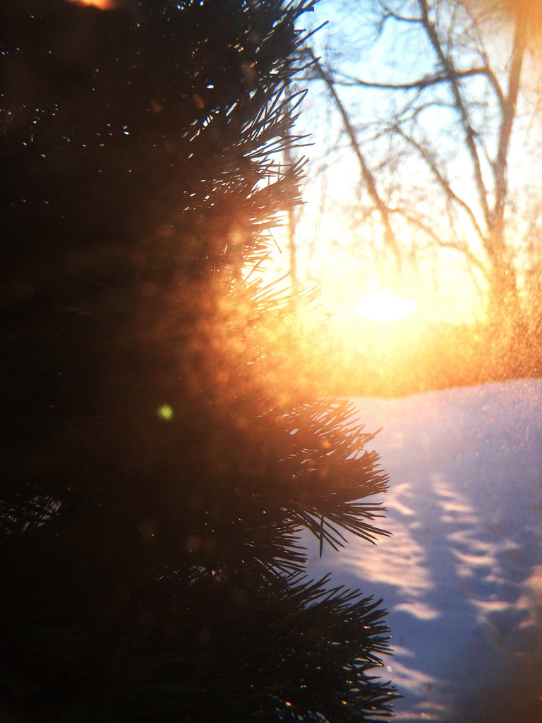 Winter Sunrise