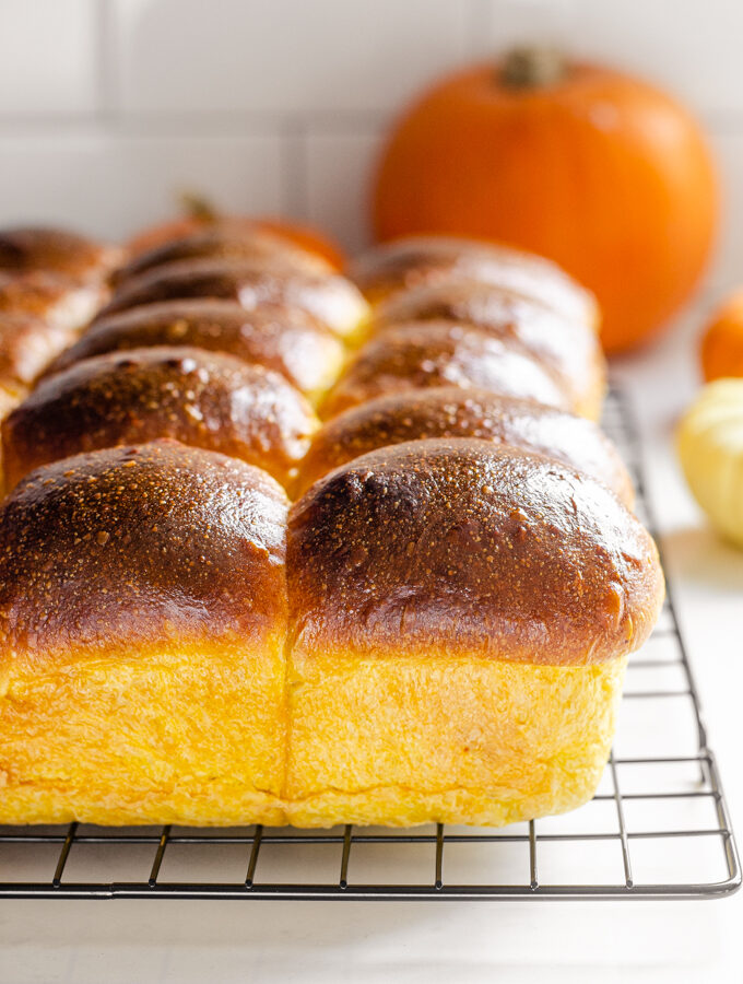 Pumpkin Sourdough Dinner Rolls