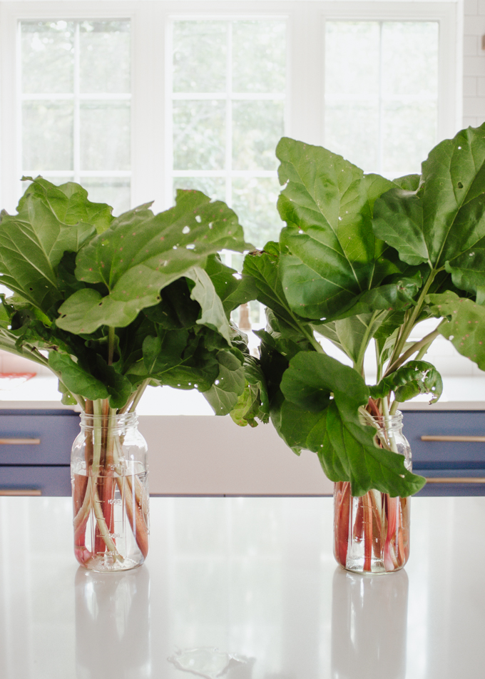 Stalks of rhubarb stored in a glass jar with water like a bouquet!